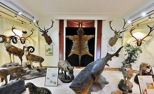 موزه تاریخ طبیعی در دارآباد